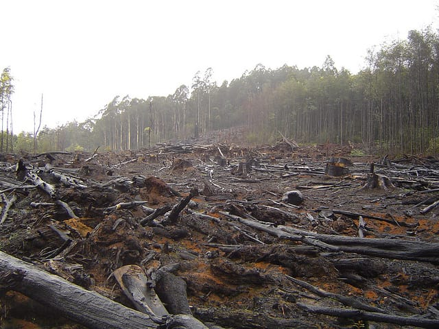 deforestation in australia Deforestation in eastern australia eastern australia australia is the only place on earth where all three major divisions of mammals are present: the egg-laying monotremes (platypus and echidna) the marsupials and the placental mammals.