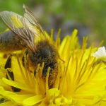 EU Prepares to Ban Neonicotinoid Pesticides