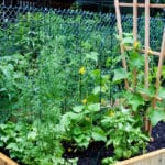 Growing Your Own Food is Delicious and Rewarding