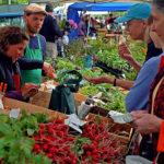 DIY Certification Guide: Identifying Authentic Produce and Ethical Farmers at the Market