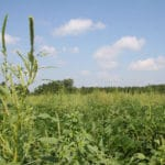 More Pesticides Build More Resistance in Weeds