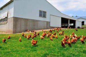 Farmers Hen House