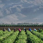 The Shrinking U.S. Farm Labor Force
