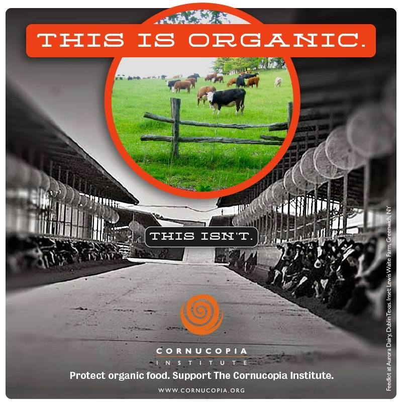 "Six ""Organic"" Dairies in Texas Outproduce 453 Organic"