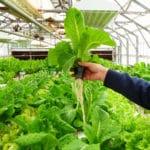"""EU Bans """"Organic"""" Hydroponic Imports"""