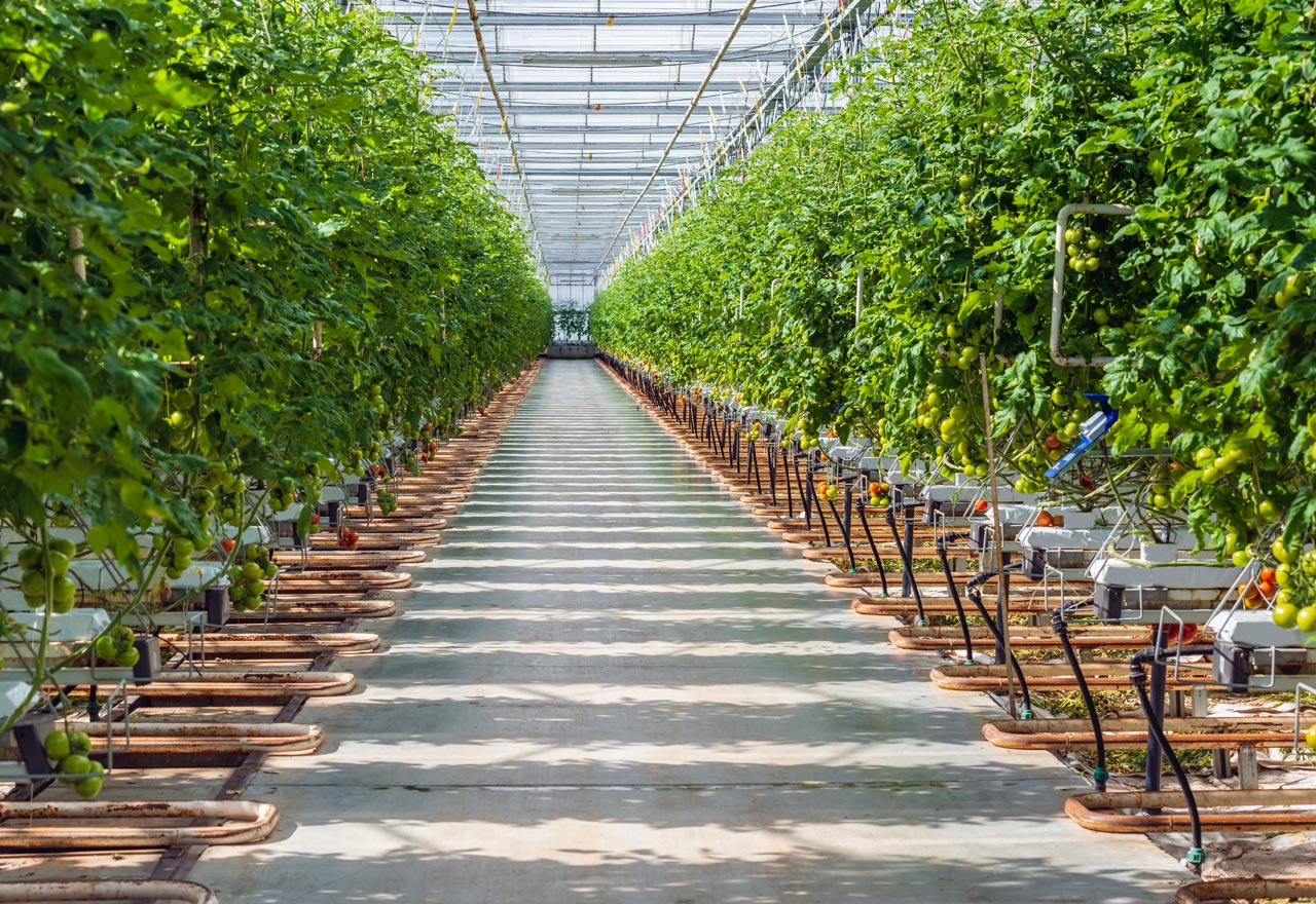 Hydroponic Research