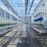 Organic Advocacy Groups File Legal Action to Prohibit Hydroponics from Organic