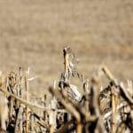 Four Cash Crops Take Up Half of Global Farmland