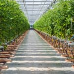 "NOP Allows Glyphosate in ""Organic"" Hydroponic Production"