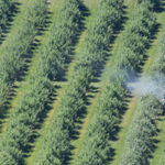 EPA Betrays Public Trust, Refuses to Ban Harmful Pesticide