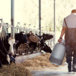 The Crisis in Organic Dairy