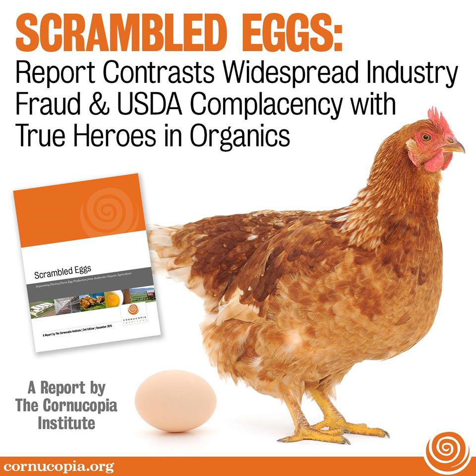 Organic Egg Research