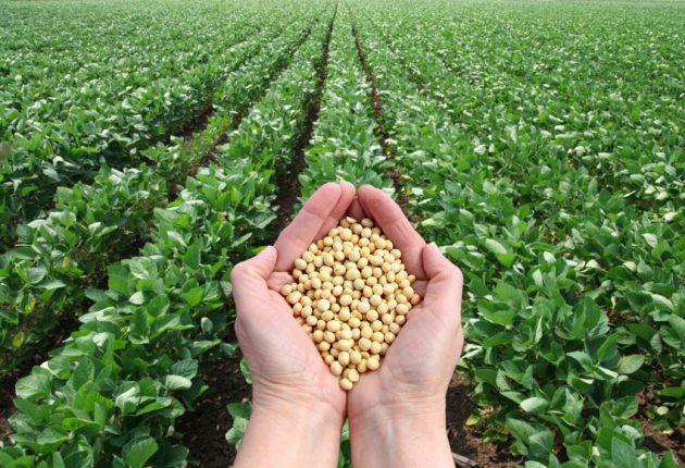 Organic Soy Food Scorecard