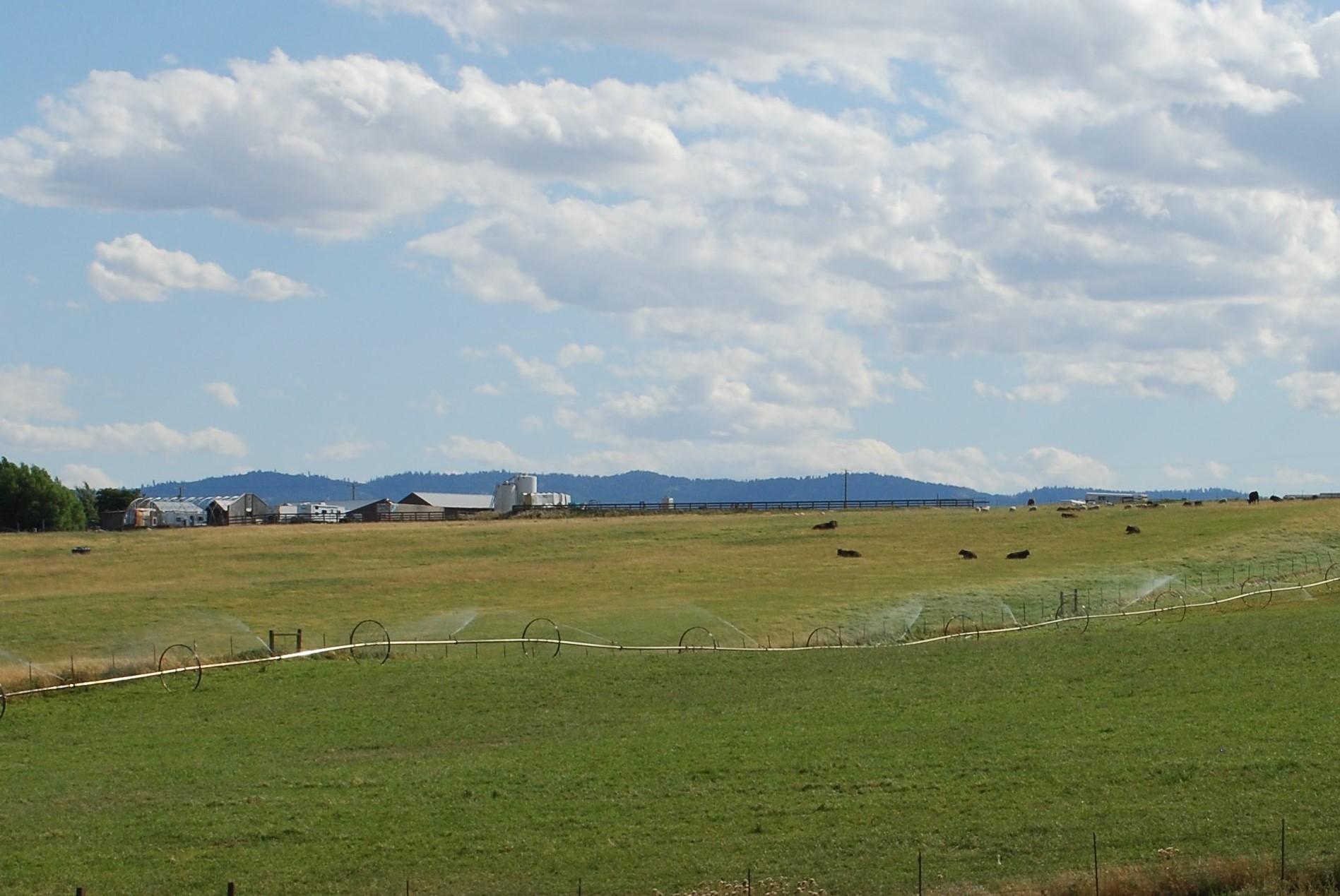 Windy N Ranch
